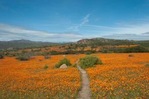 West Coast - Namaqualand
